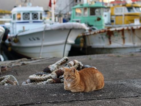 Ilustrativna fotografija mačke
